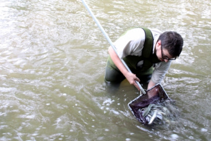 Half a ton of eels were released into 10 Catalan rivers (by ACN)