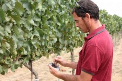 Photo of Wine-growers expect 2010 to be one of the best vintages in years