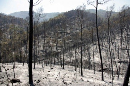 A forest dramatically affected by the blazes (by ACN)