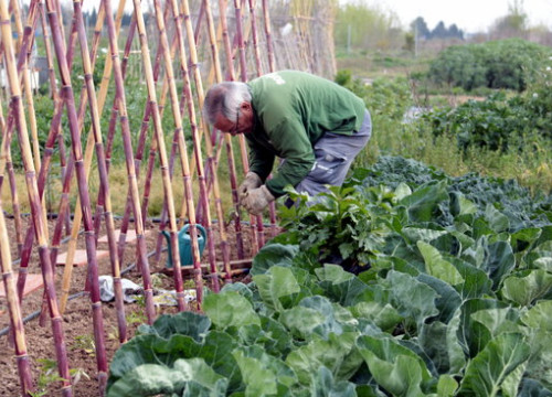 A man in Lleida tends to his vegetable garden (by Salvador Miret)