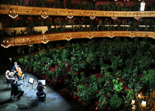 A string quartet performing Puccini for 2,292 plants at Barcelona's Liceu opera house on June 22, 2020 (by Pau Cortina)