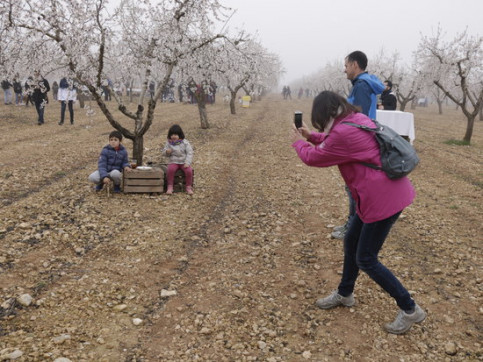 Children pose for pictures among almond trees in bloom in Arbeca on February 16, 2020 (by Anna Berga)