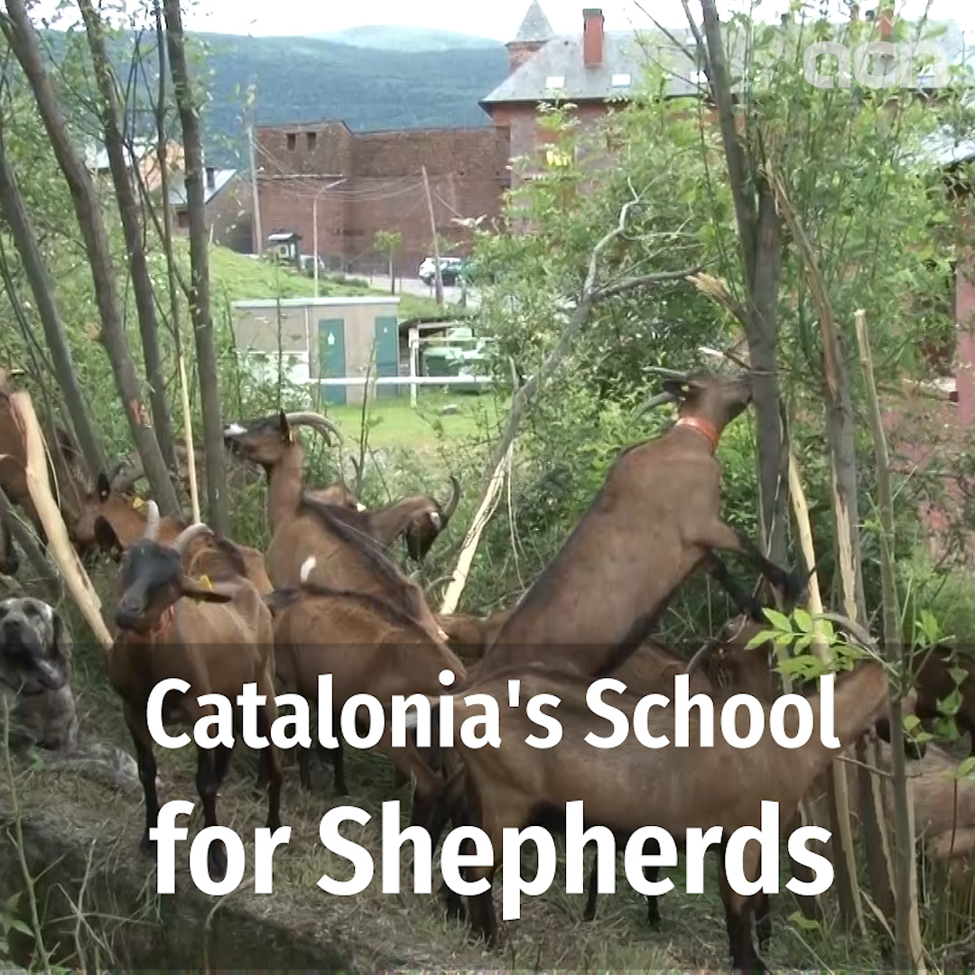 Catalonia's shepherd school oversubscribed year after year as interest continually grows