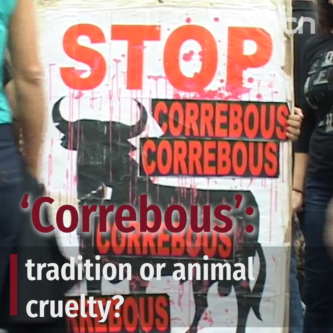'Correbous': Tradition or animal cruelty?