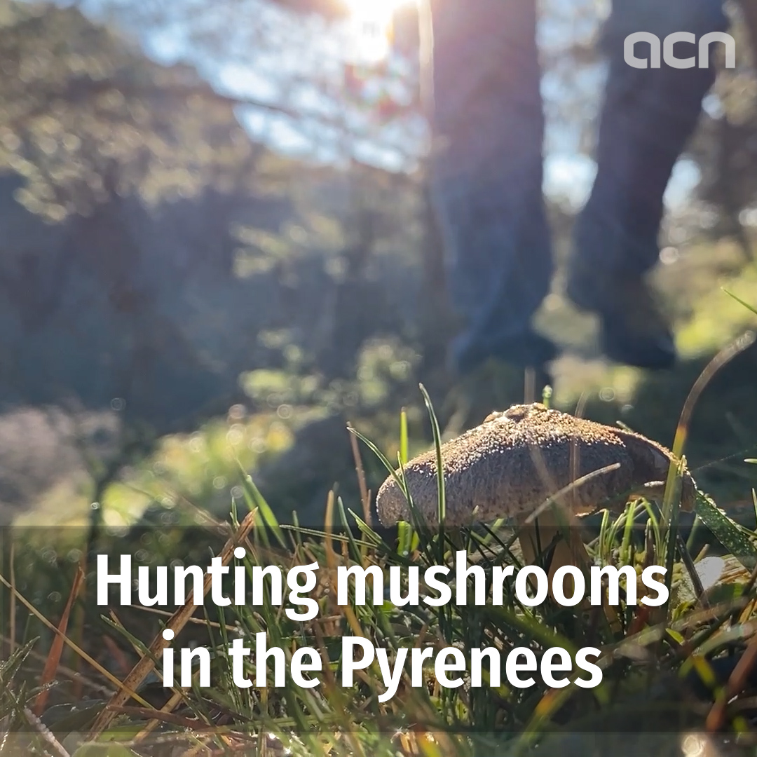 Hunting mushrooms in the Pyrenees
