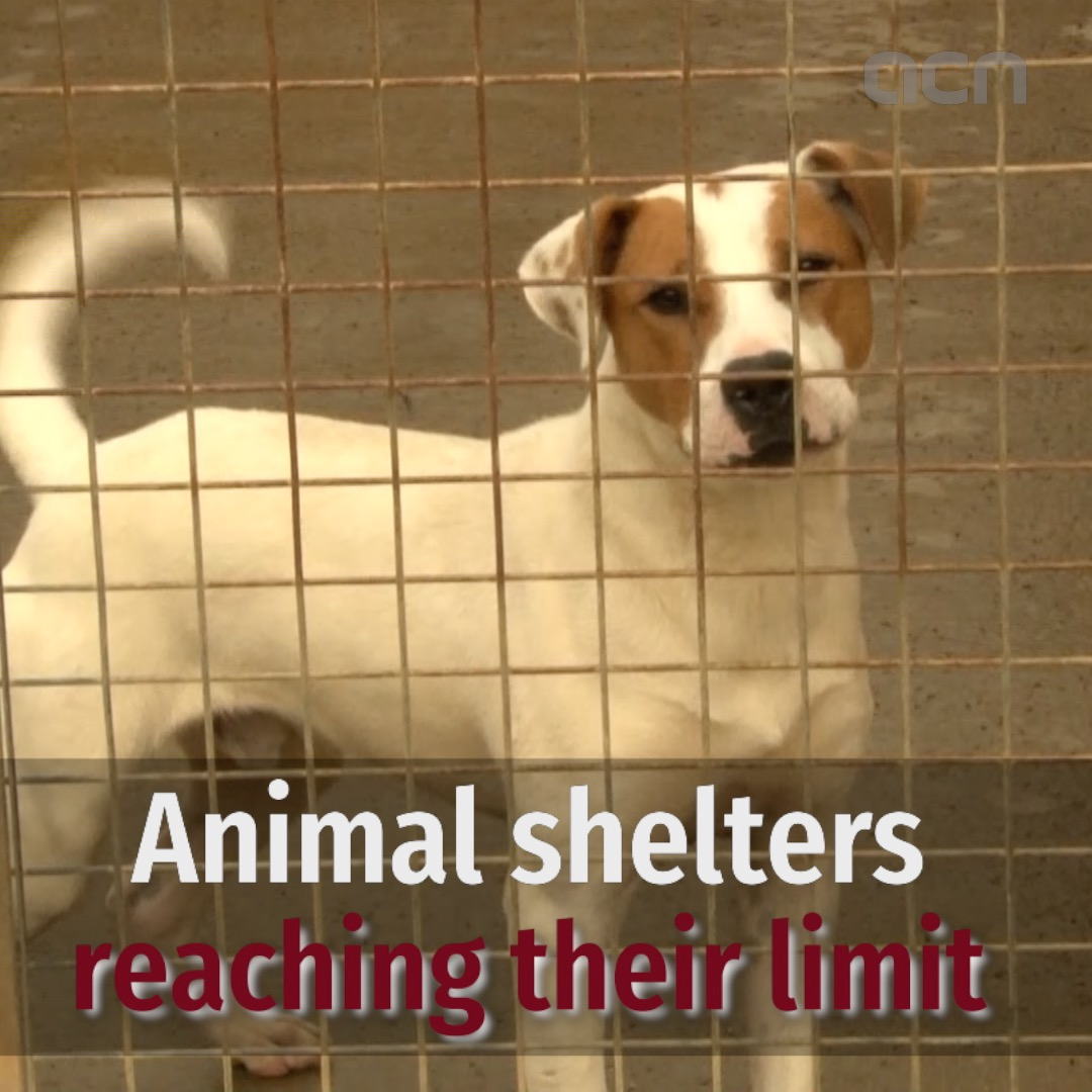 Animal shelters reaching their limit