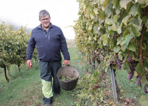 Winegrower Xavier Ribes in his vineyard in Montan de Tost on October 10 2018 (by Albert Lijarcio)