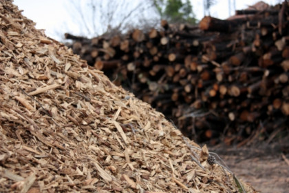 Biomass produced from Catalan forests (by ACN)