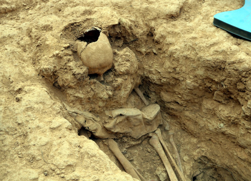 Skeleton found in mass grave in Vilanova del Meià (by Estela Busoms)