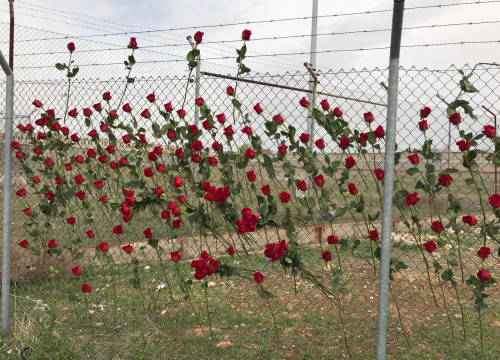Pro-independence supporters leave roses in the fence of Alcalá Meco, the Madrid prison where Dolors Bassa and Carme Forcadell are imprisoned (by ACN)