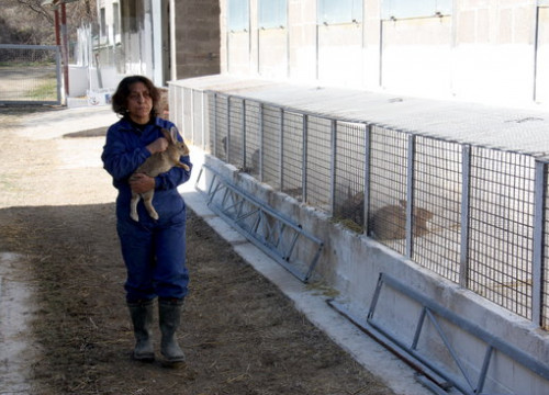Isabel Perera, owner of the ecological rabbit farm Finca Canemar