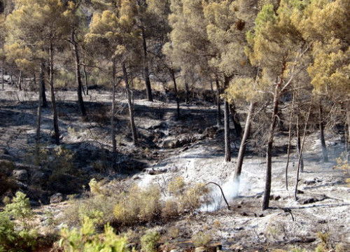 Image of an area affected by the blaze in southern Catalonia. (Photo: Salvador Miret)