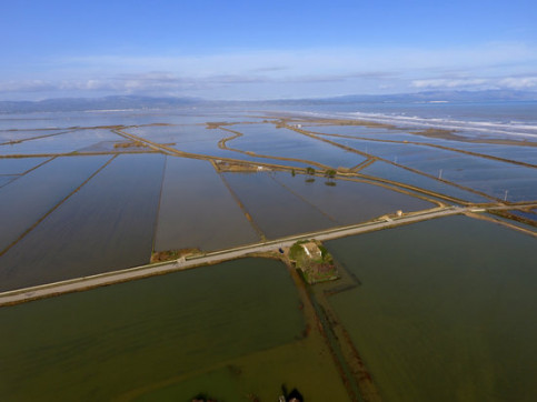 Aerial view of rice fields flooded with sea water in the Marquesa area, in the Ebre Delta January 23, 2020 (by Quim Vallès)