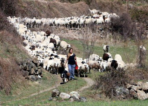 Shepherd Anna Plana photographed with her flock of sheep in Vall d'Àssua in the Catalan Pyrenees (by Marta Lluvich)