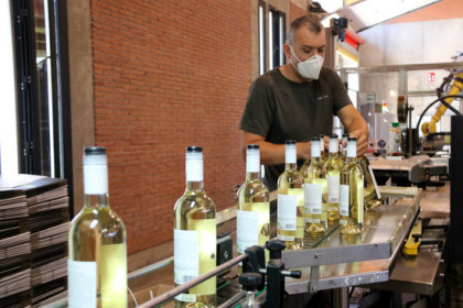 A worker on the bottling line of a celler in the Penedès region wearing a facemask (by Gemma Sánchez)