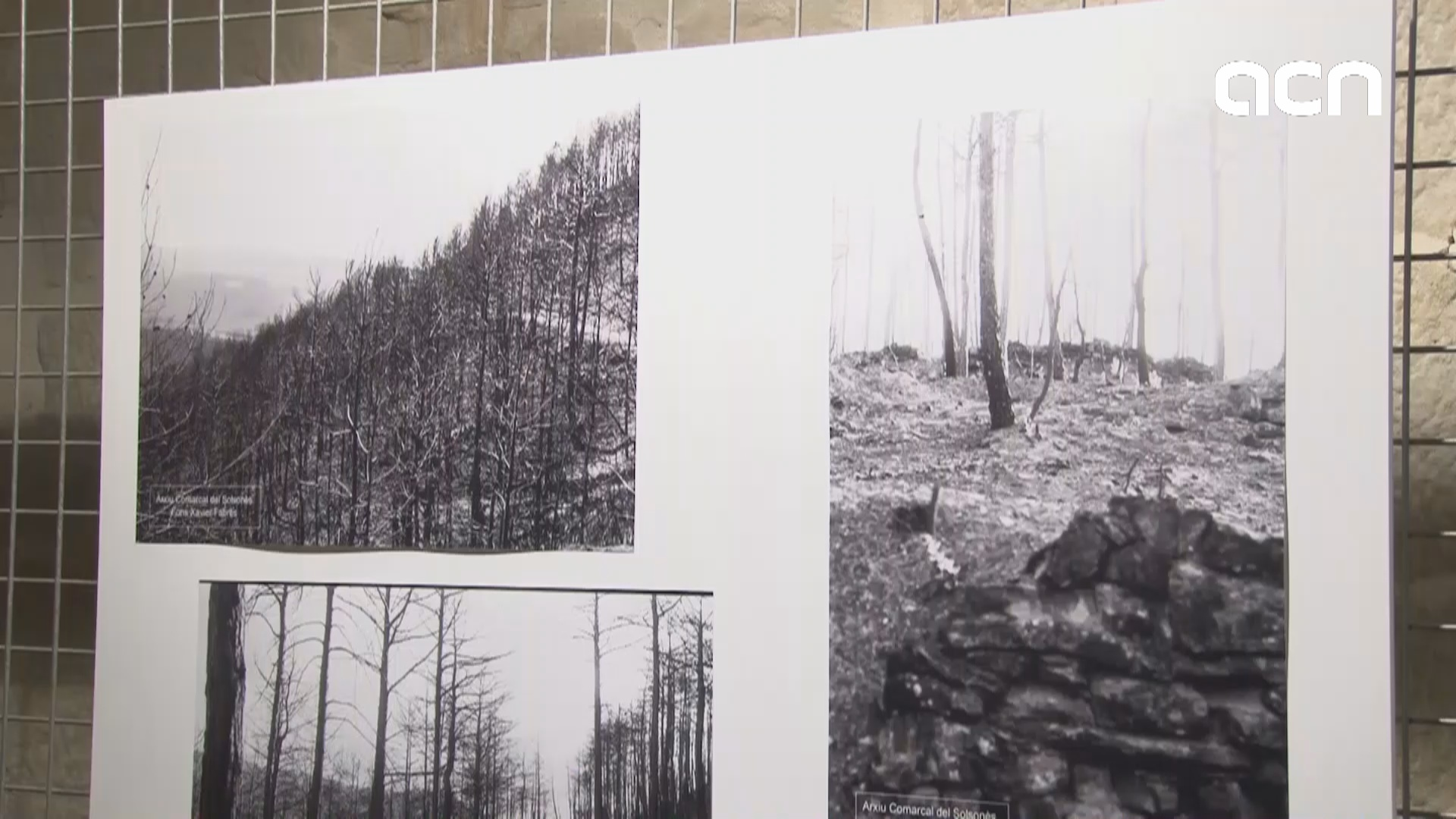 Anniversary of the 1998 fire that destroyed 24,000 hectares