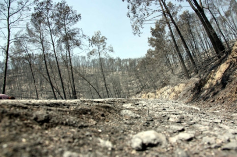 Landscape after the last July's Alt Empordà County's forest fires (by J. Pujolar)