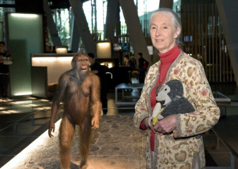 Jane Goodall in the CosmoCaixa science museum, in one of her seldom visits to Barcelona (by CosmoCaixa)