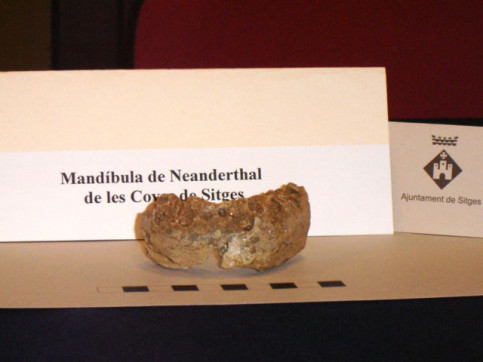 The so-called 'jaw of Sitges' when it was found in 2005 (by ACN)