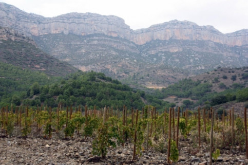 An image from the Priorat wine region near the Montsant hills (by A. Ferràs)