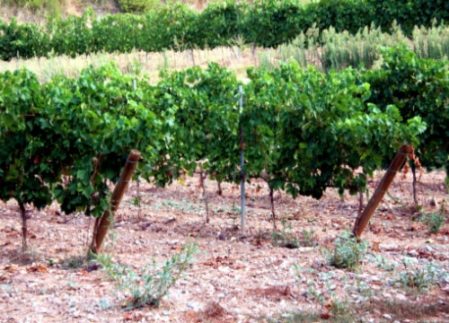 Cava exports have broken a new record this 2012 with nearly 161 million bottles sold (by E. Escolà)