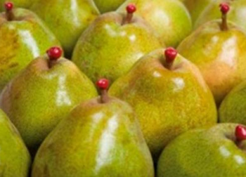 Pears from Lleida