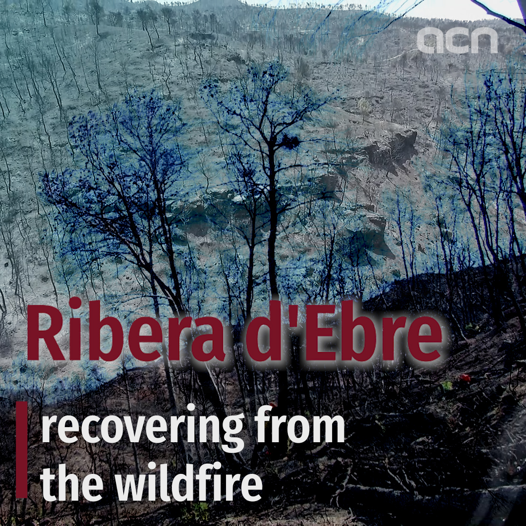 Ribera d'Ebre: recovering from the wildfire