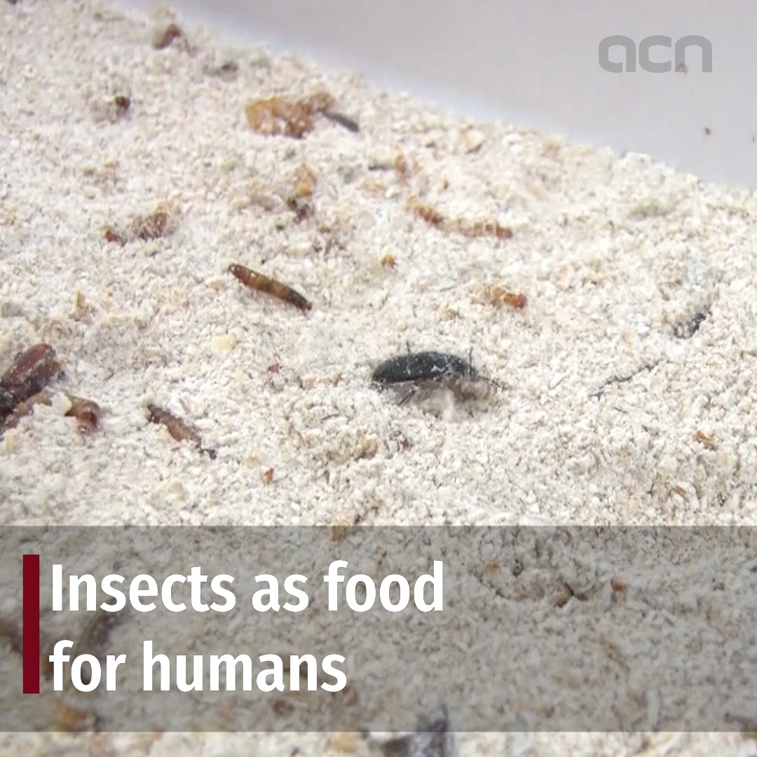 Insects as food for humans