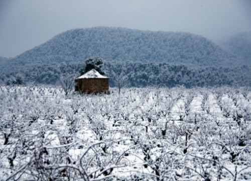 Snow covered vineyards in the Bages County, in Central Catalonia (by E. Escolà)