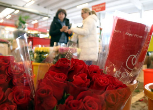 Roses at the Flower and Ornamental Plant Market of Catalonia on April 16 2018 (by Norma Vidal)