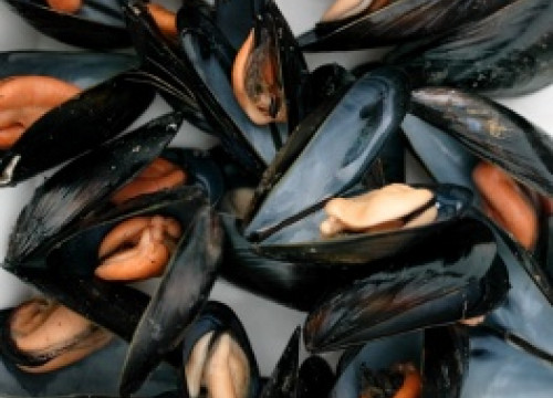 Mussels from the Delta de l'Ebre