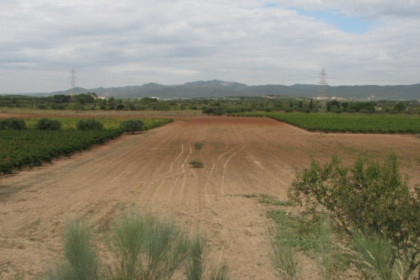 The fields where the CIP is planned to be built (by ACN)