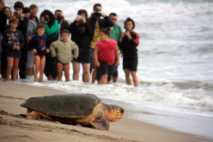 Freeing turtles in one of Greater Barcelona's beaches (by B. Cazorla)